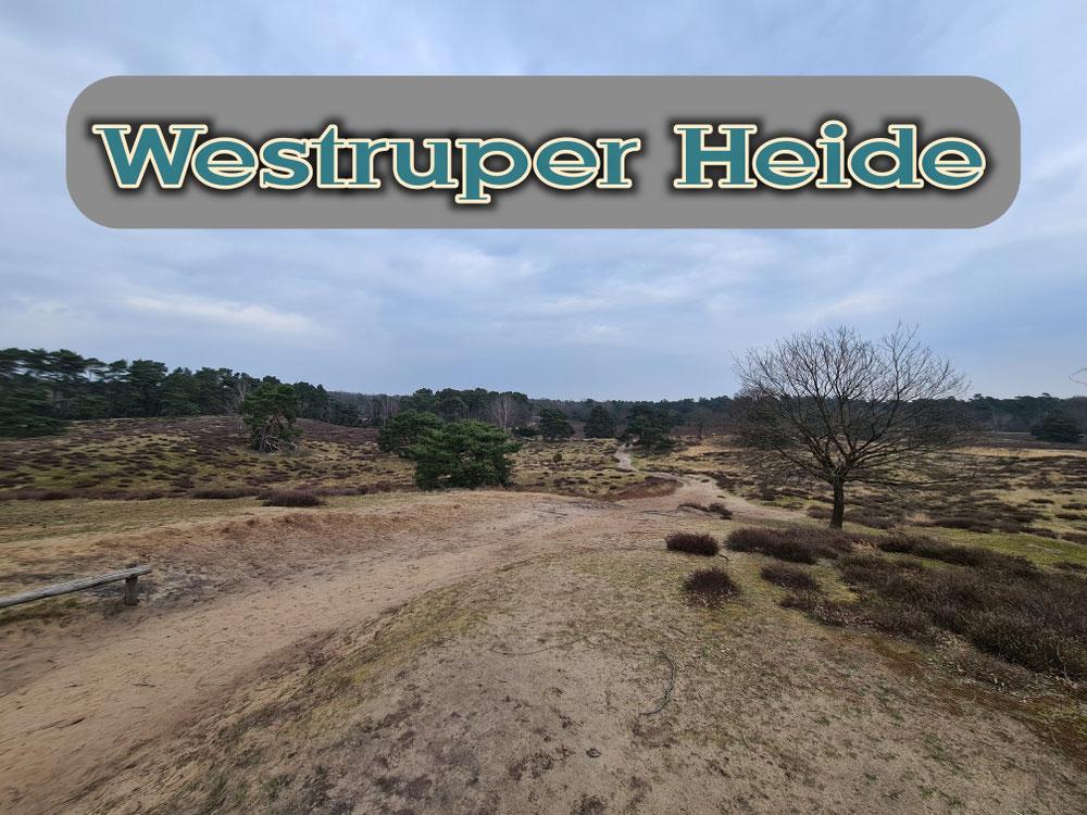 Wanderung durch die Westruper Heide
