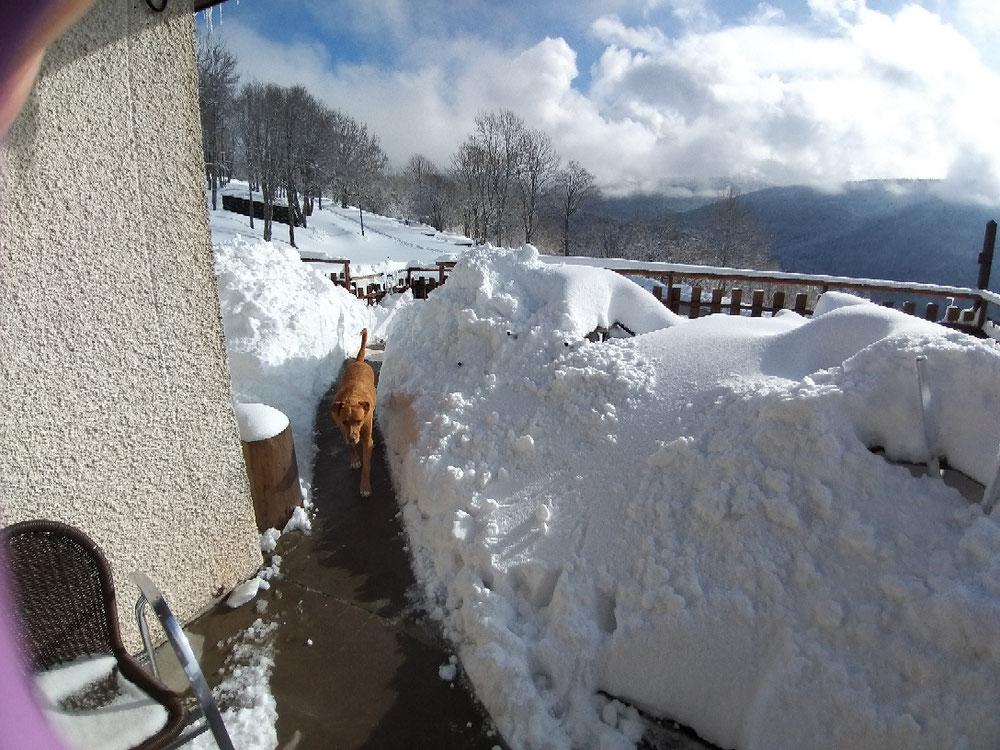 Janvier 2018 70cm