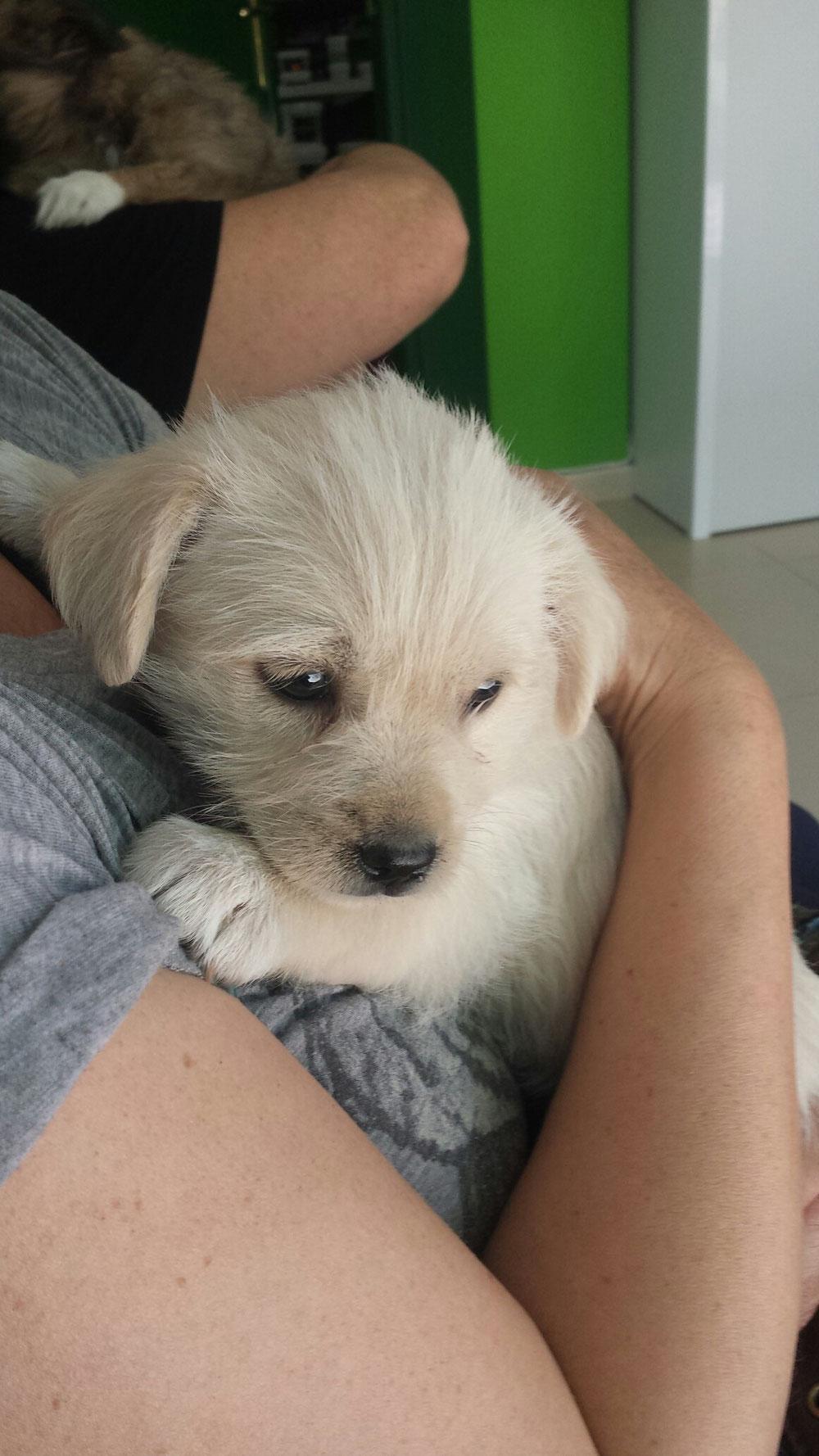 Adoptada en Motril el 21/05/3016