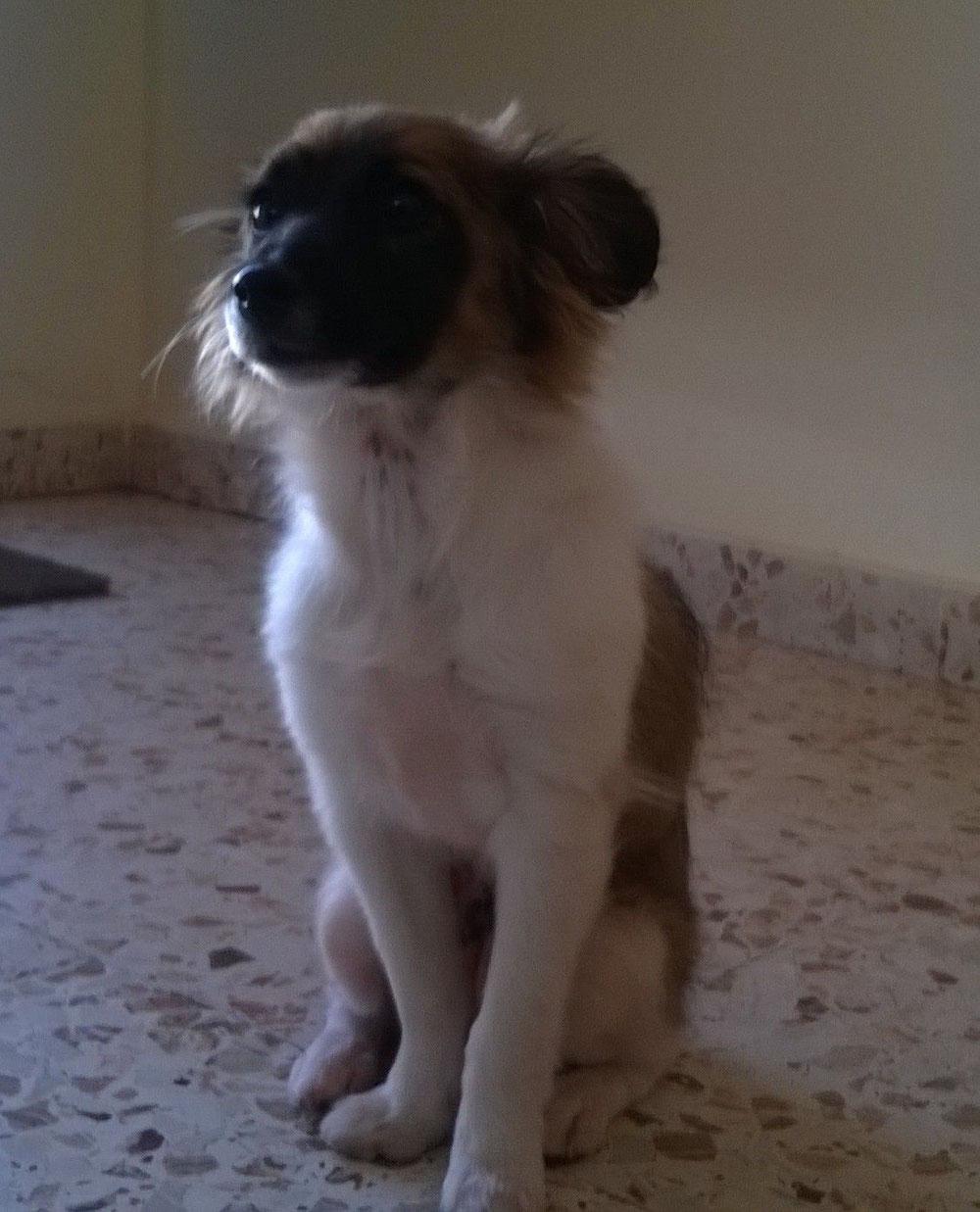 Lirya adoptada en Alemania