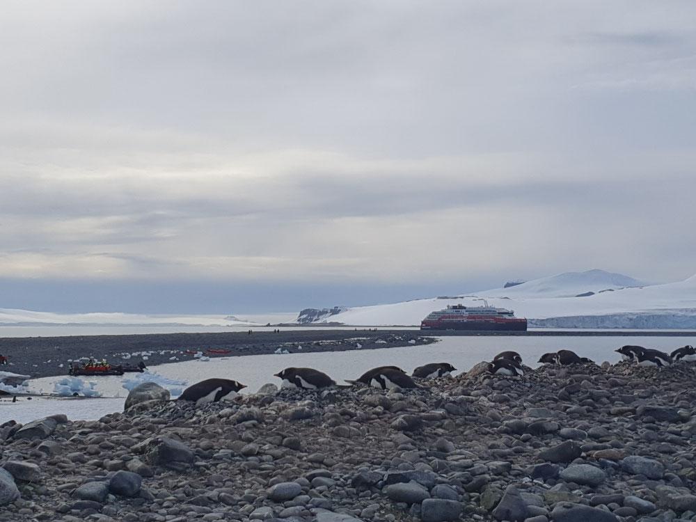 Pinguinkolonie vor Mutterschiff und Landungsgruppen