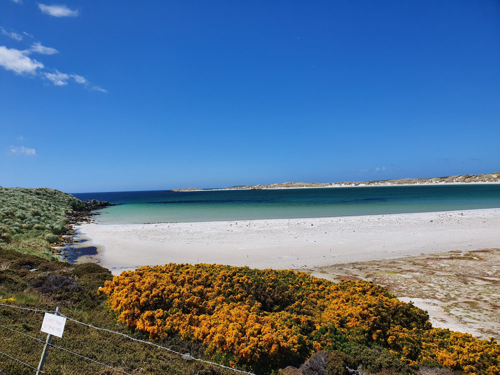 Noch vom Falklandkrieg verminte Stände bilden ein Eldorado für Pinguine, Robben und alle möglichen seltenen Vögel