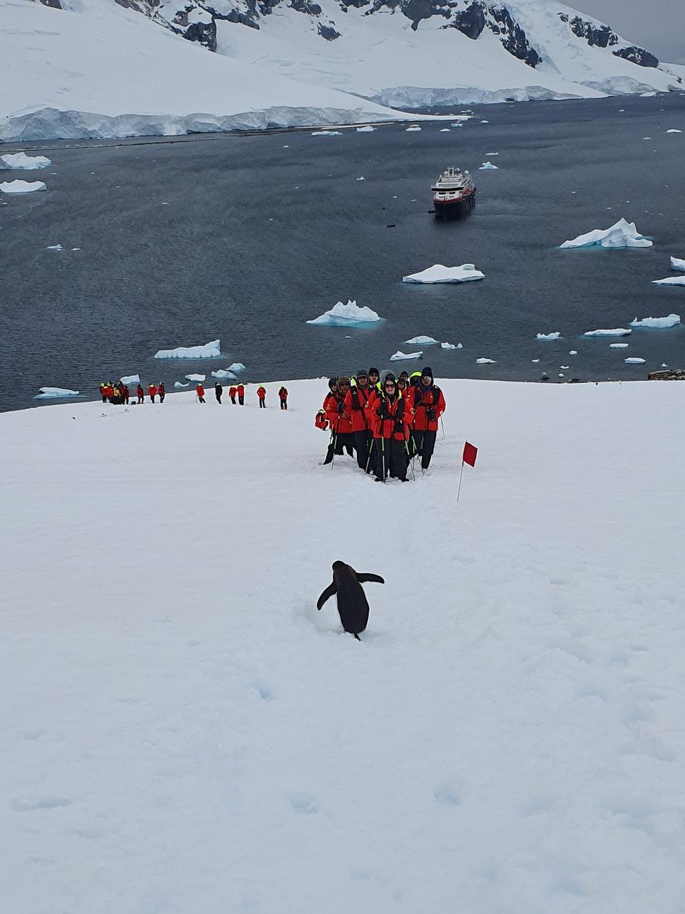 Pinguin regelt den Verkehr