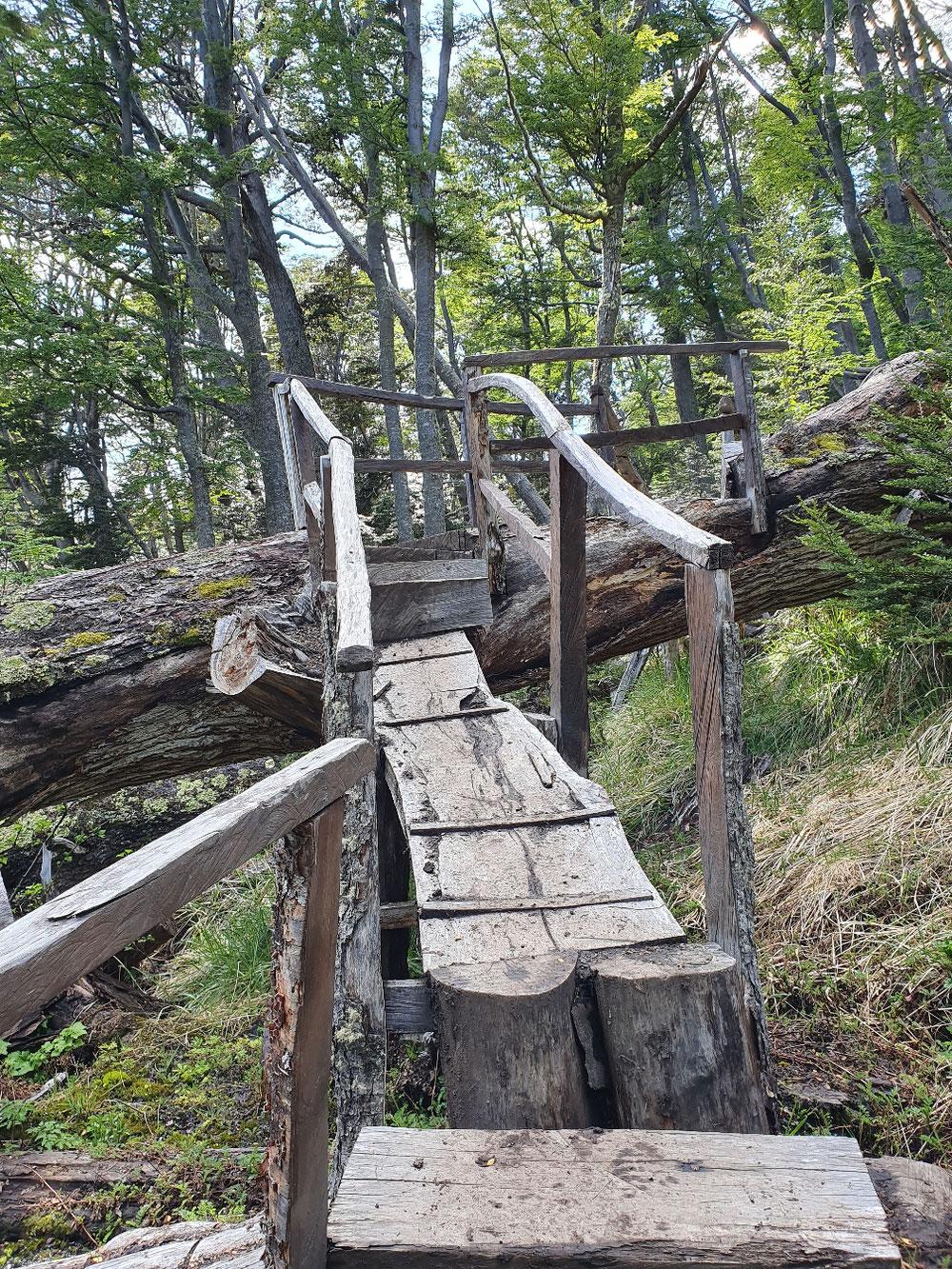 Kreativer Umgang mit umgestürzten Bäumen