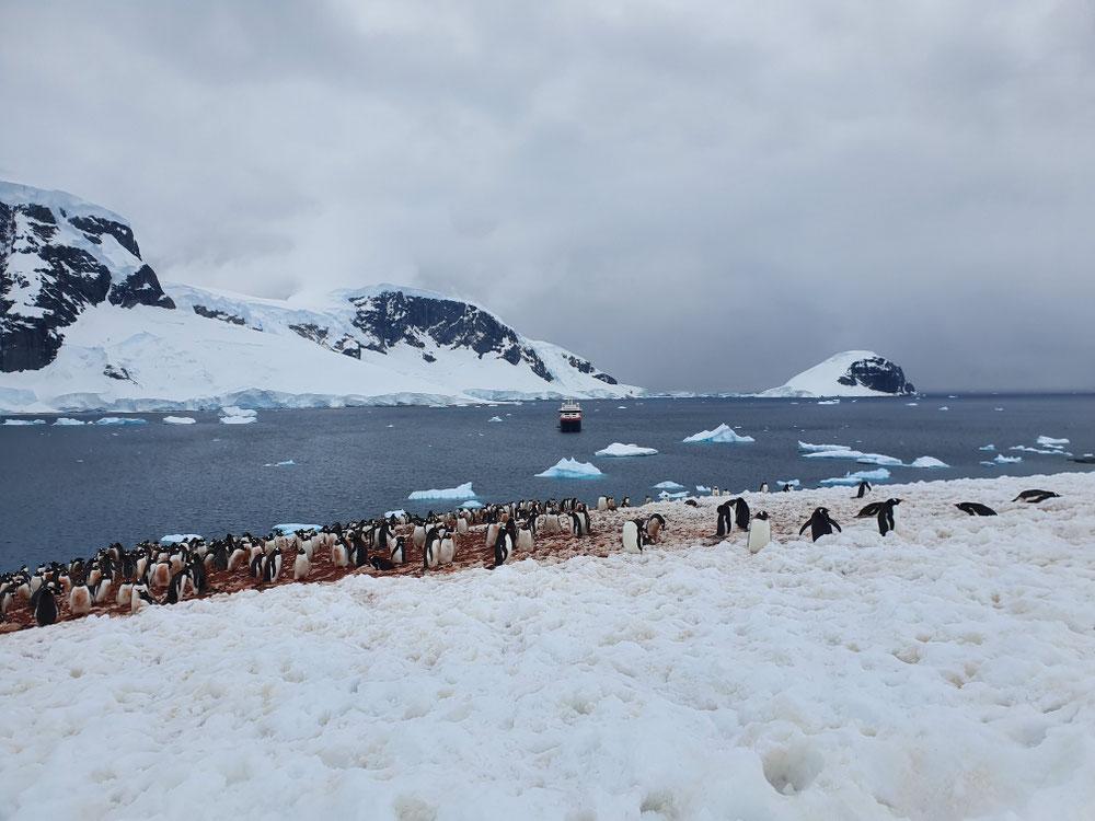 Pinguinkolonie auf Duncan Island