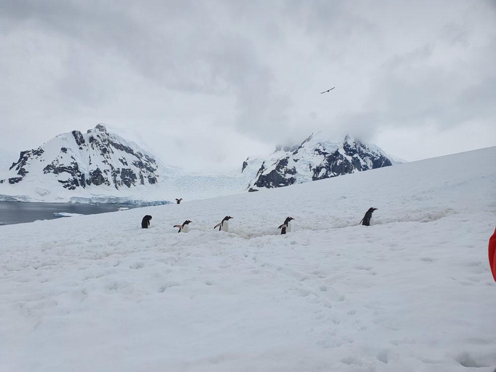 Ein sogenannter Pinguinhighway