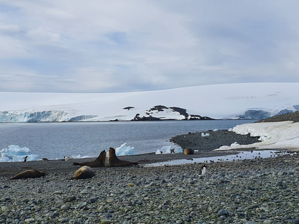 Pinguine und Elefantenrobben