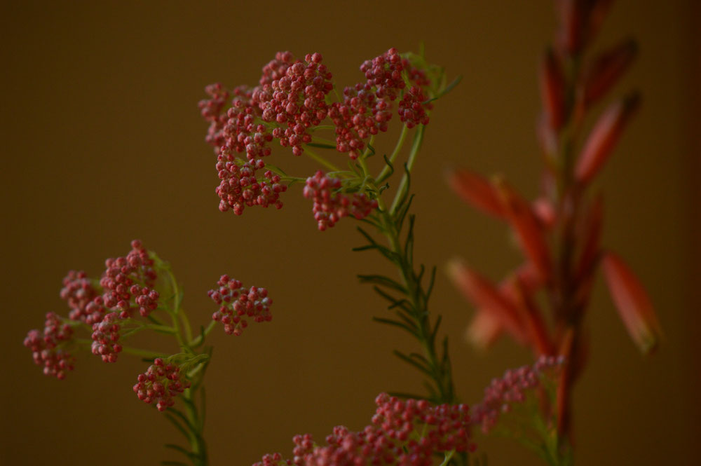 small sunny garden, in a vase on monday, monday vase, iavom, desert garden, amy myers, ozothamnus