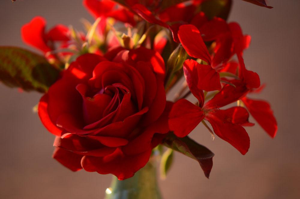 rose Daniela