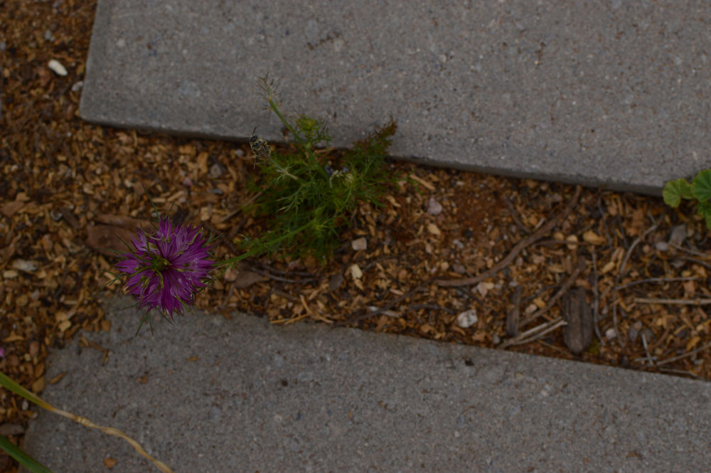 small sunny garden, desert garden, amy myers, photography, tuesday view
