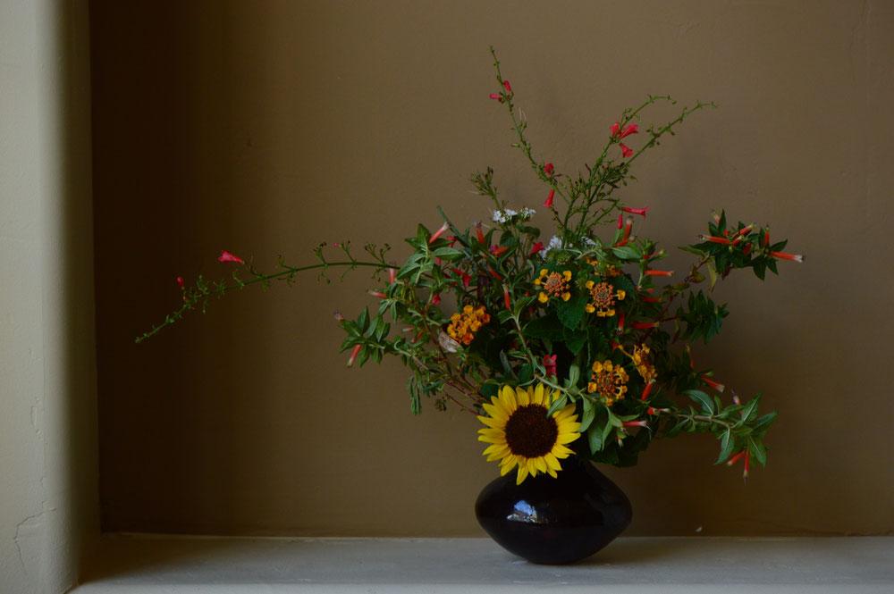 small sunny garden, desert garden, amy myers, in a vase on monday, monday vase, iavom, garden blog, sunflower