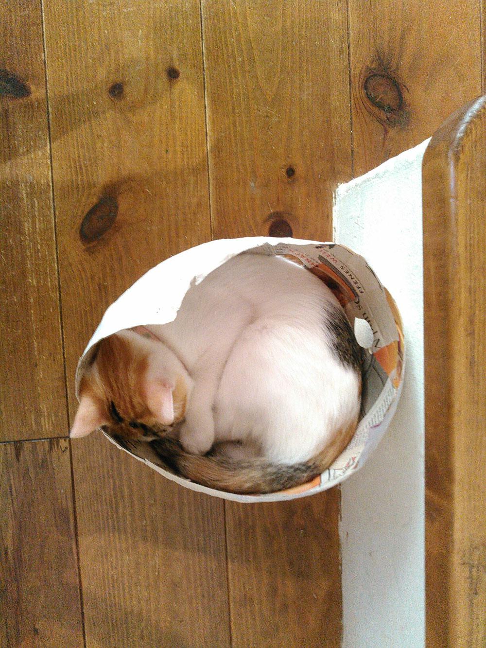 見本で作ったはりこは猫のベットになりました