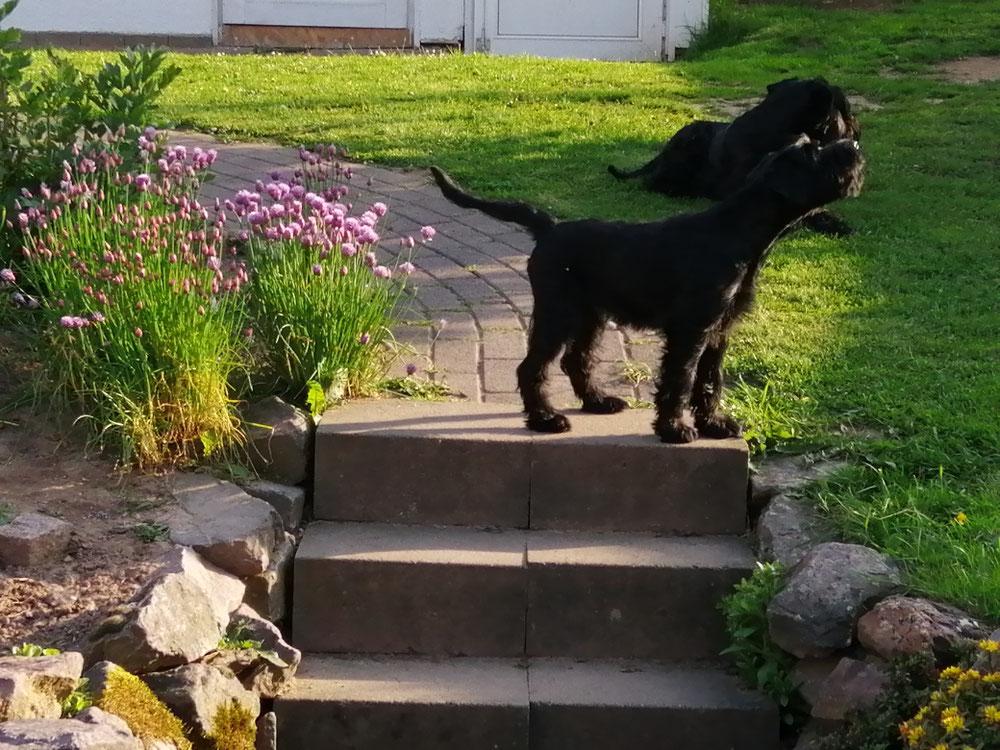 Antje vom Nachbarn Hund genervt