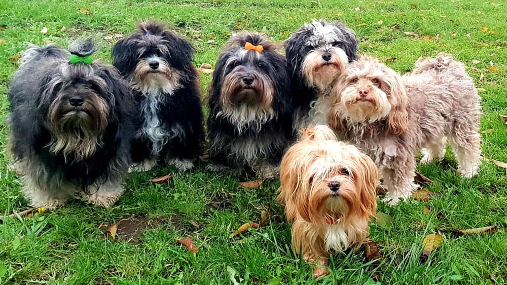 Chenok, Kenai, Diego, Minou, Nandi und Peaches