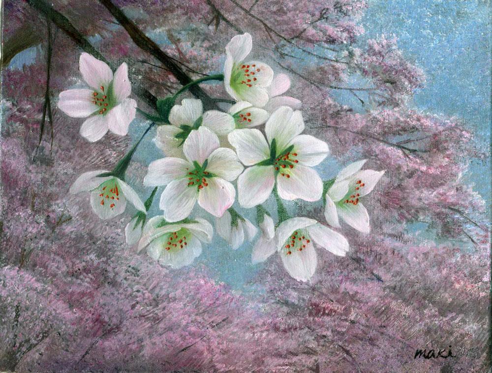 [三月桜]F0号 油彩