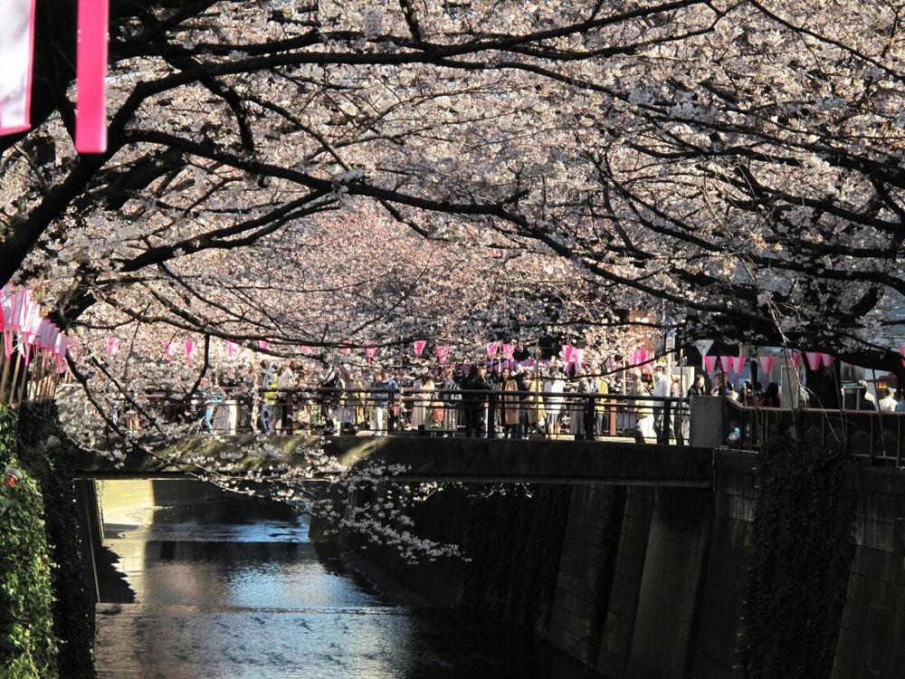 ◆東京中目黒。