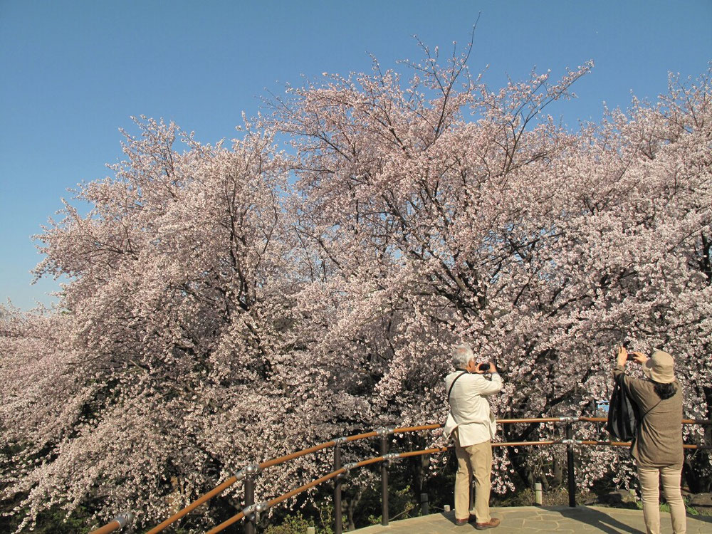 ◆新宿区戸山公園山頂。