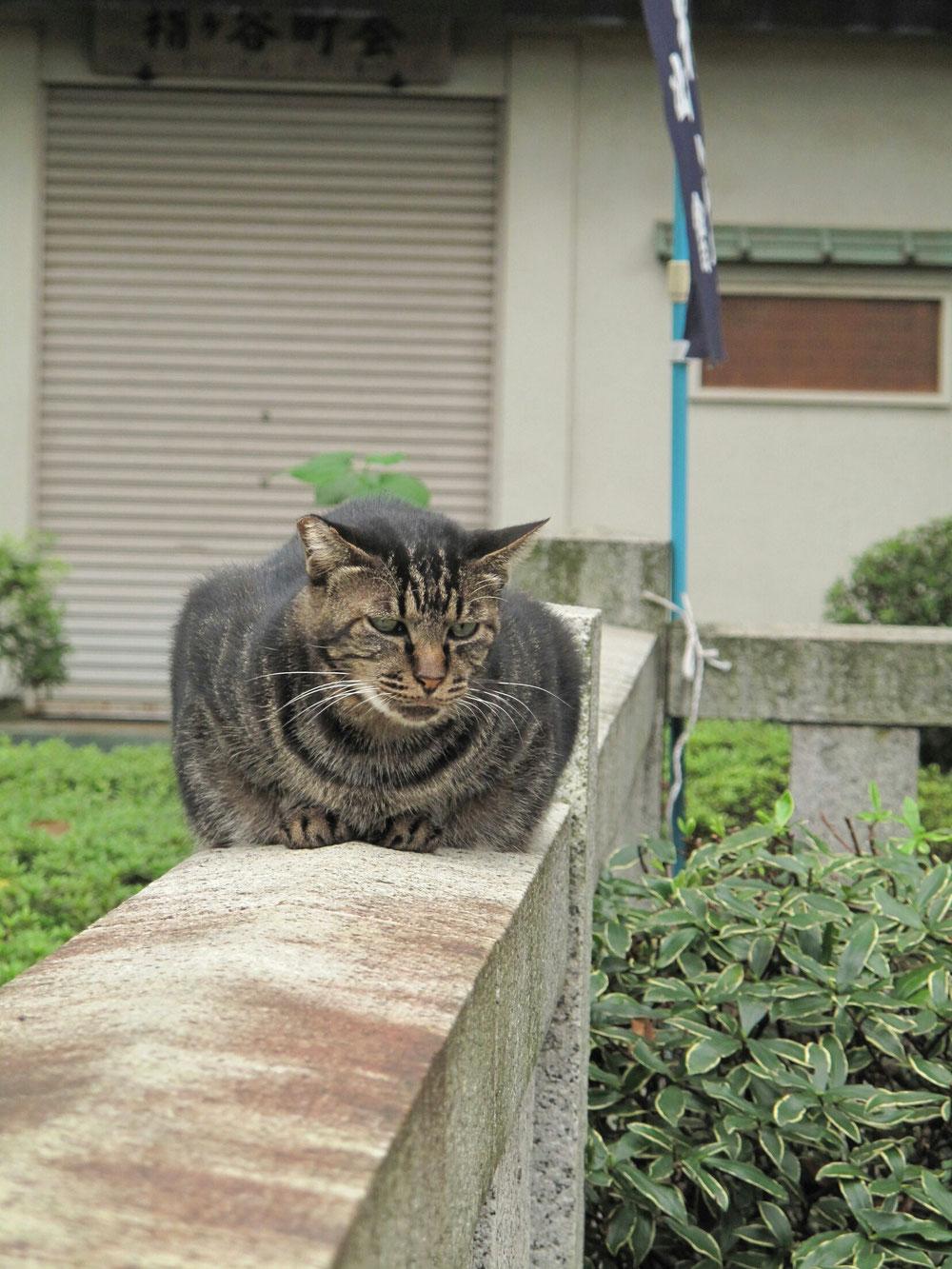 東京白山神社