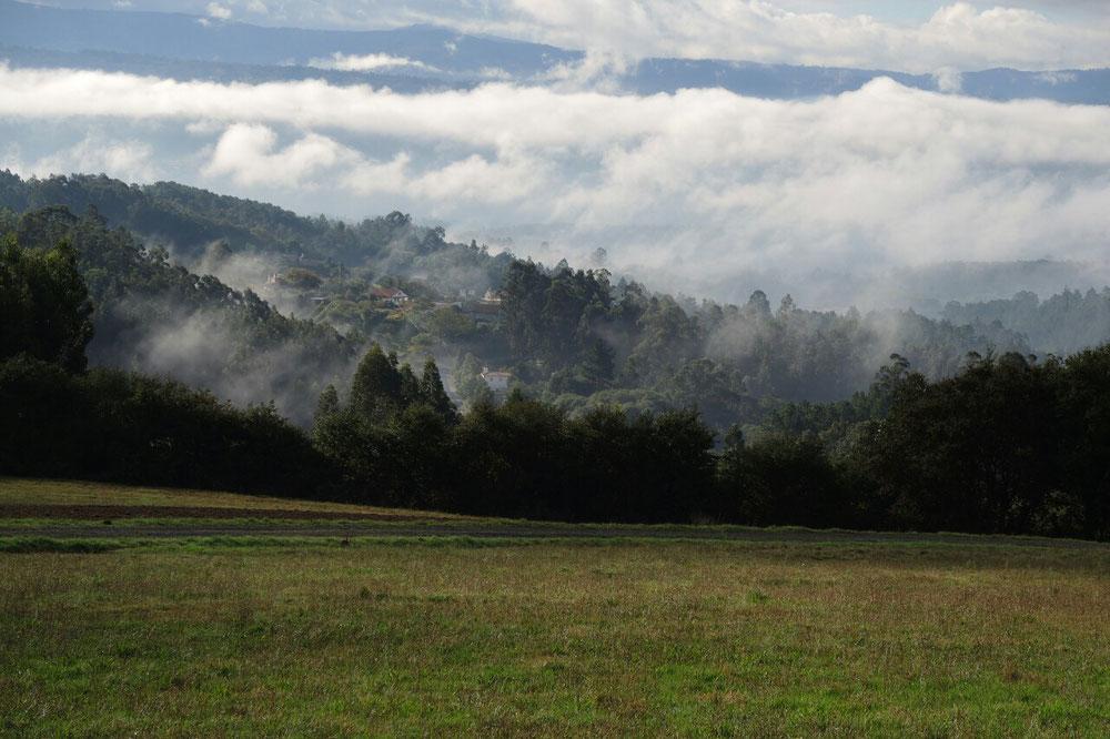 Grüne Galicia