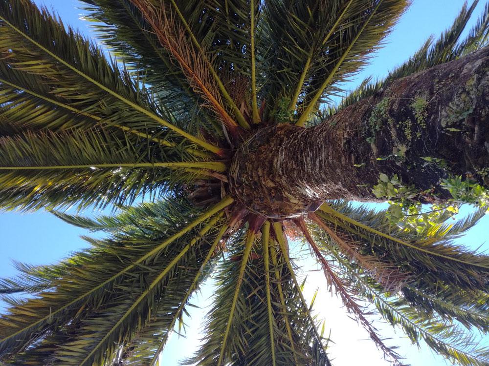 ... unter Palmen gelegen ...