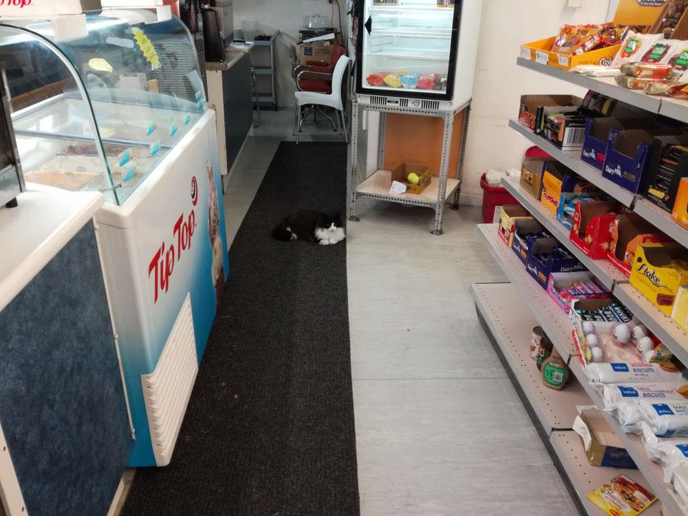 Zwischendurch was eingekauft. Und man stelle sich vor - eine Katze im Lebensmittelgeschäft!!