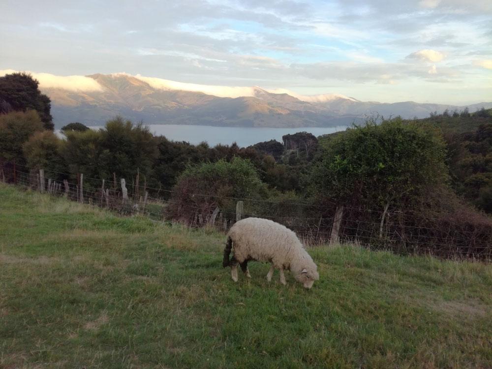 TAG NEUNUNDZWANZIG ... bevor der letzte Morgen in Neuseeland wunderbar beginnt. Zugesehen, wie die Wolken über die Berggipfel kriechen und ein letztes Mal die Idylle verinnerlicht, bevor es gleich ans Kofferpacken geht.