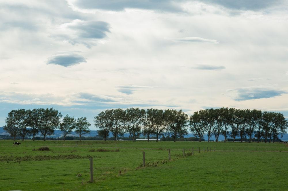 TAG VIERUNDZWANZIG Weiterfahrt durch weitflächigen Neuseeland-Niederrhein.