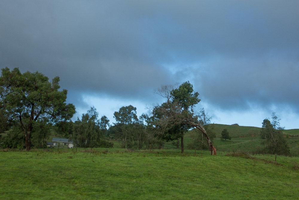 TAG ACHT Kurz nachdem wir aufgebrochen waren, ging kurz hinterm krummen Baum der Himmel auf...