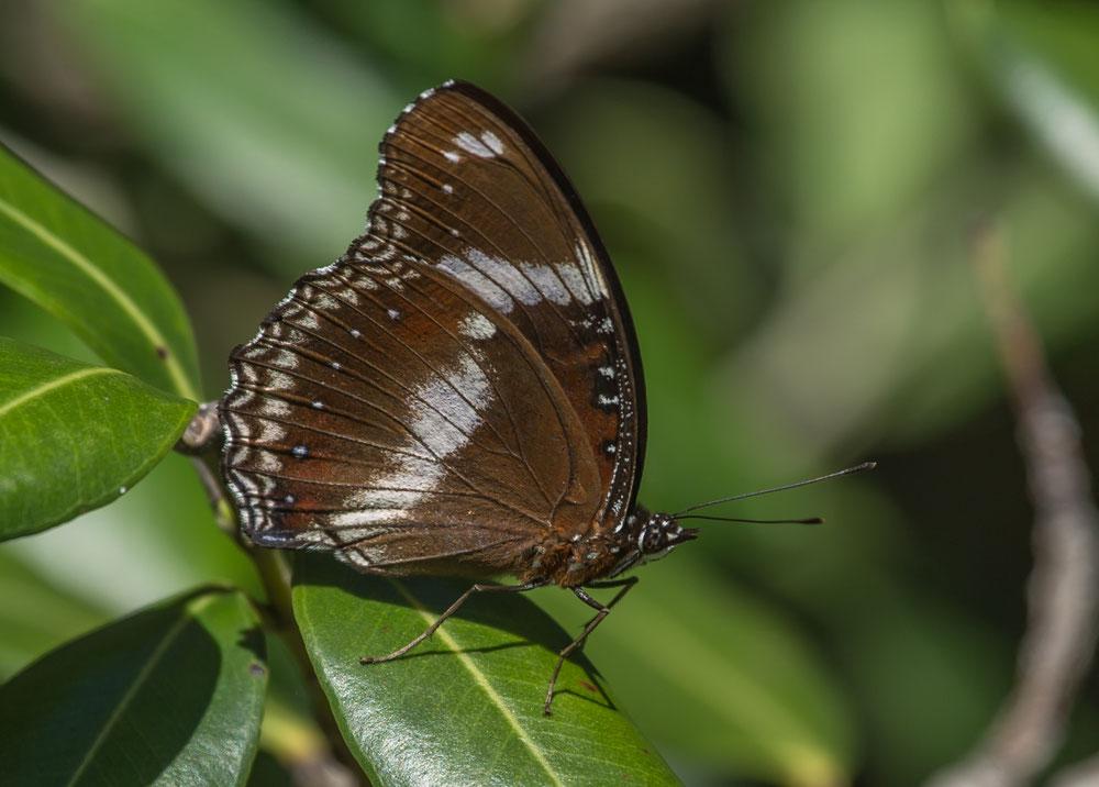 ...und flattern Schmetterlinge, wie man sie nur aus dem Tropenhaus kennt.