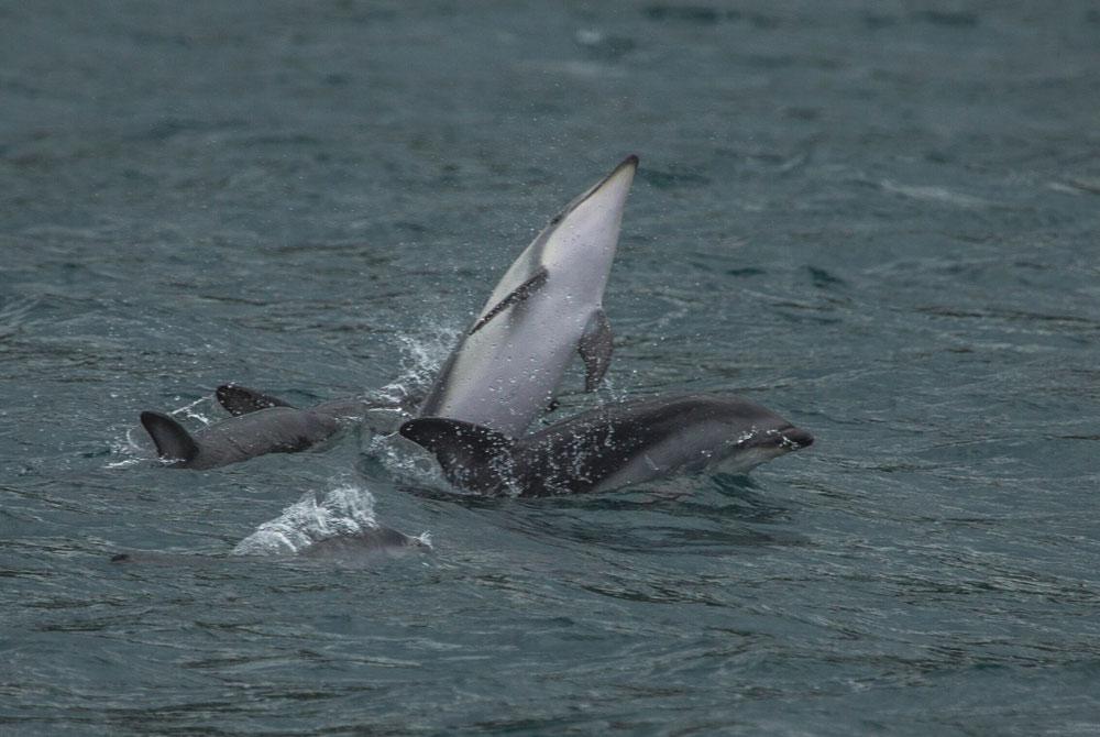 ... mit deren flotten Speränzken die Fotografin bei dem starken Wellengang wirklich zu tun hatte ...