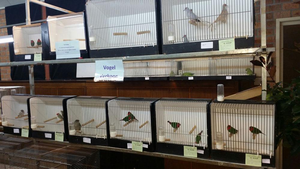 Een deel van de vogels die te koop zijn tijdens de t.t.