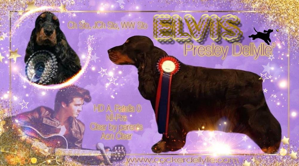 Elvis Dellyllè