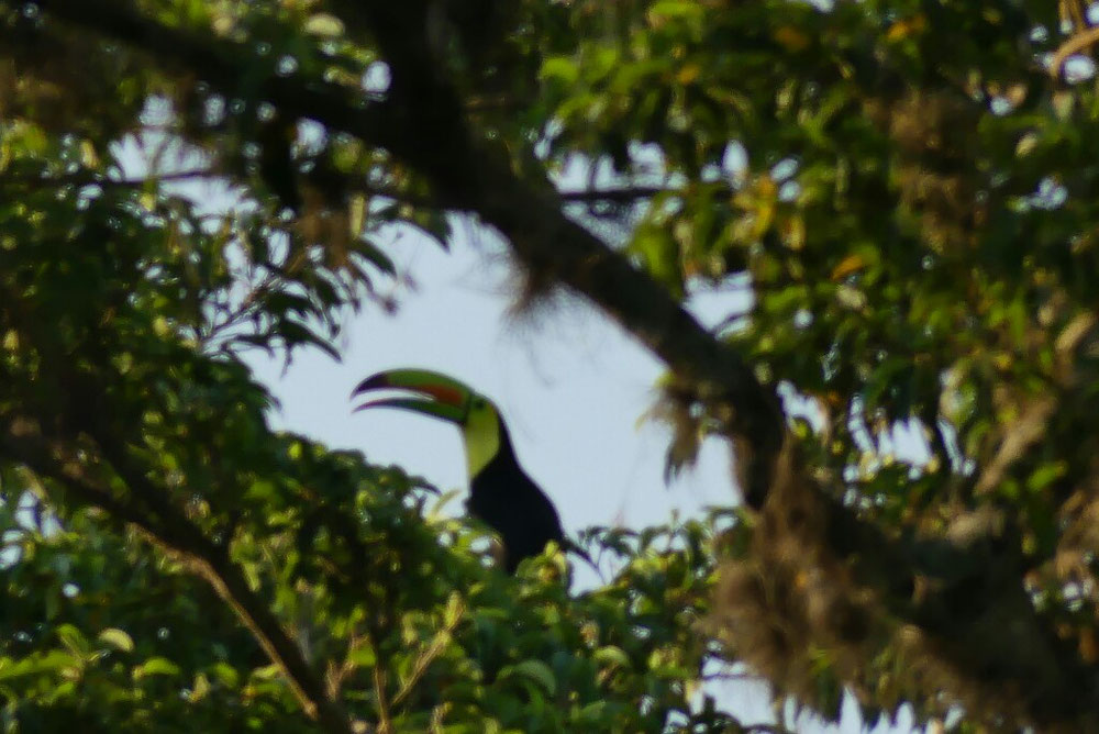 der Tukan - war nicht leicht zu entdecken
