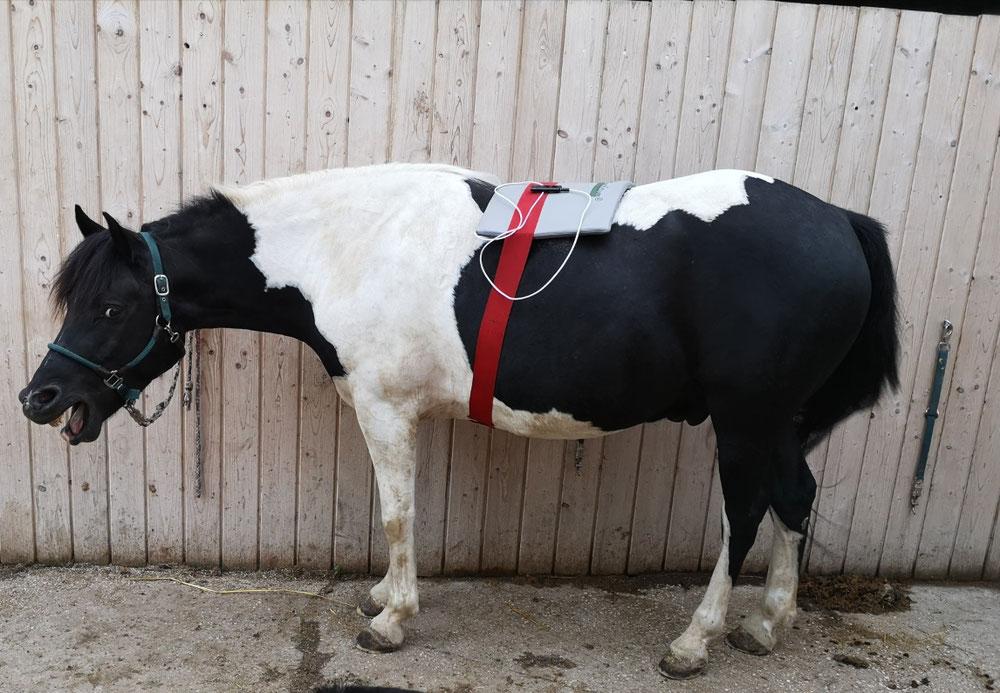 Frequenz-Feld-Therapie am Pferd