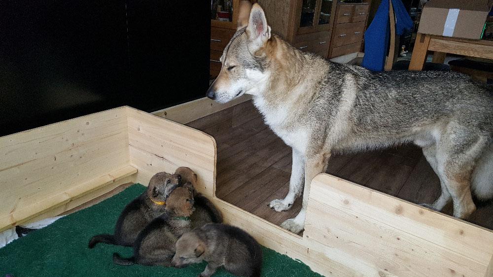 Der stolze Papa mit seinen Kids