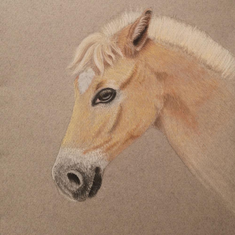 Pferdeportrait Pastellkreide