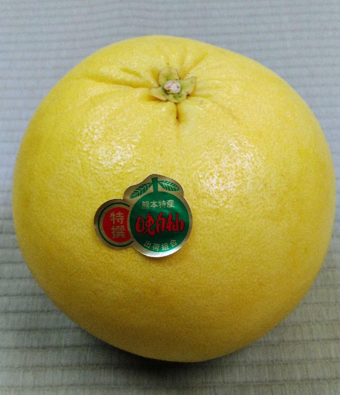 八代特産の「晩白柚」です。