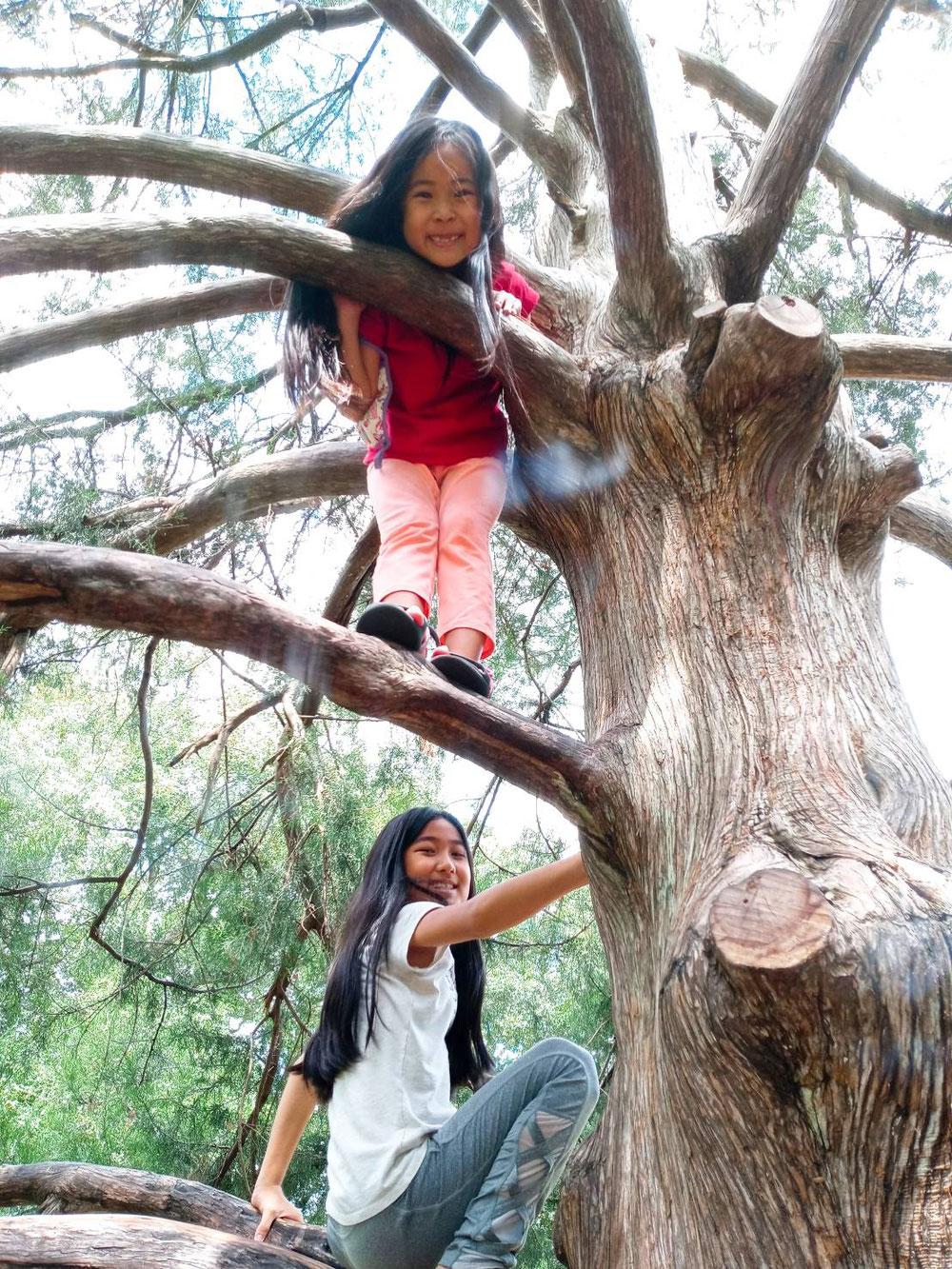 木登り。子供は元気が一番!