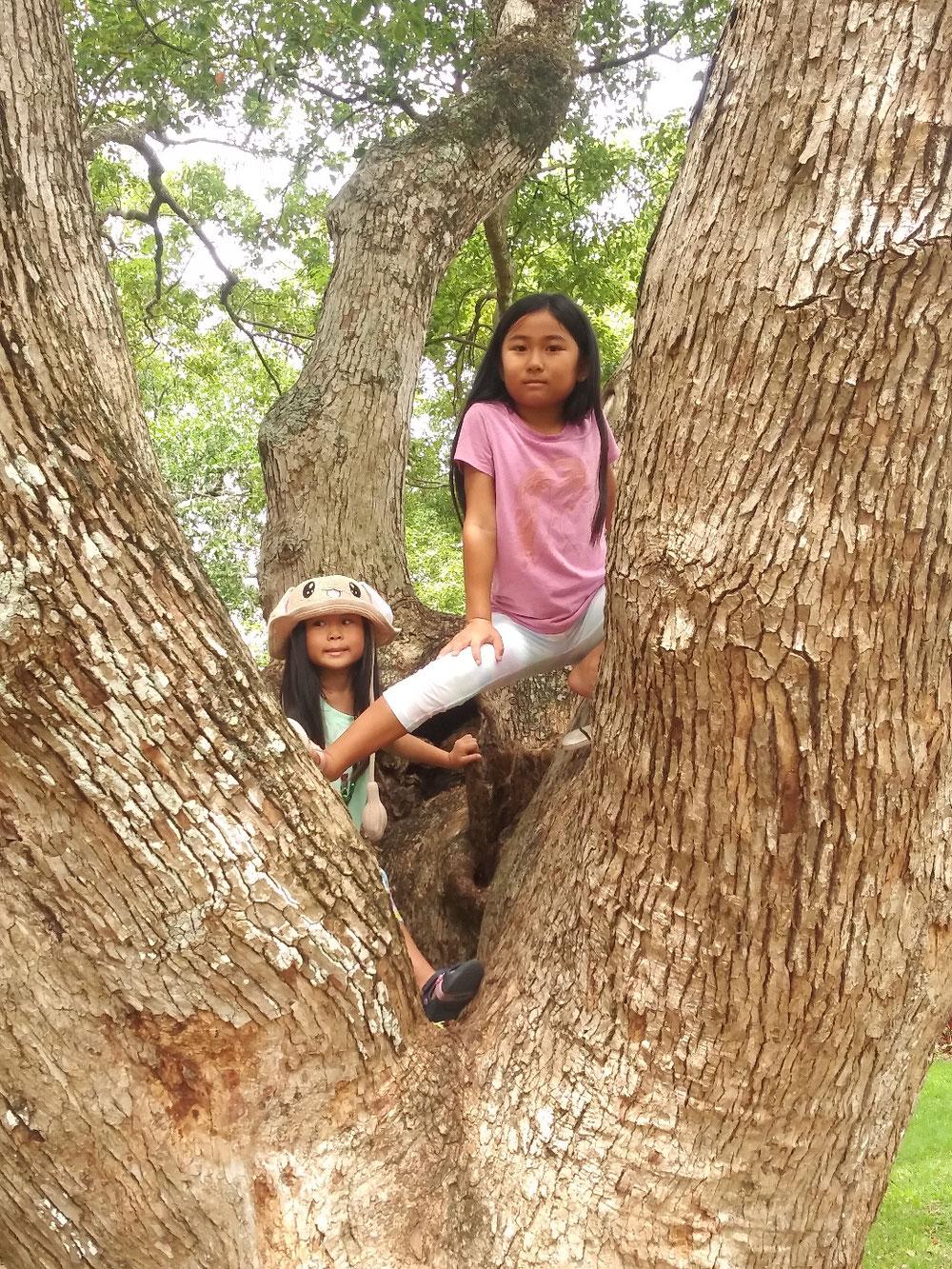 ちょっと木登りも。