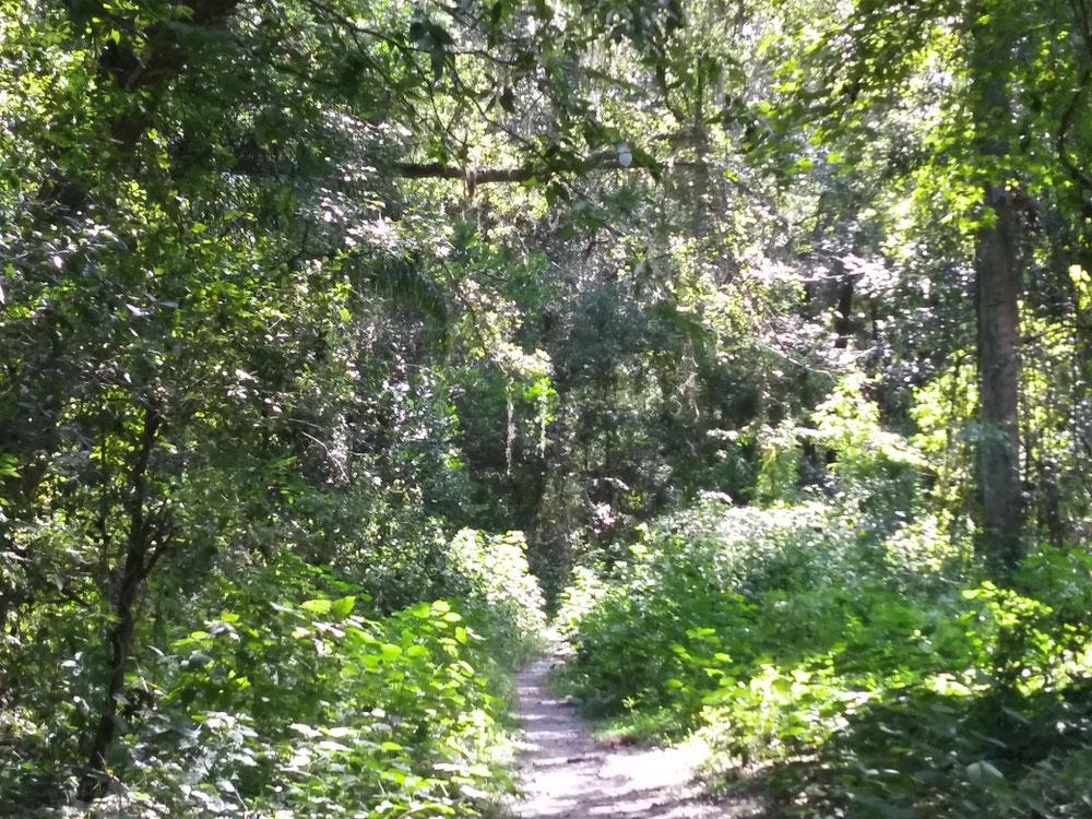 森の中へ続く道