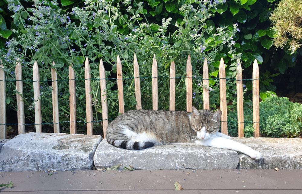 Katze Kasi fühlt sich Zuhause am Wohlsten...