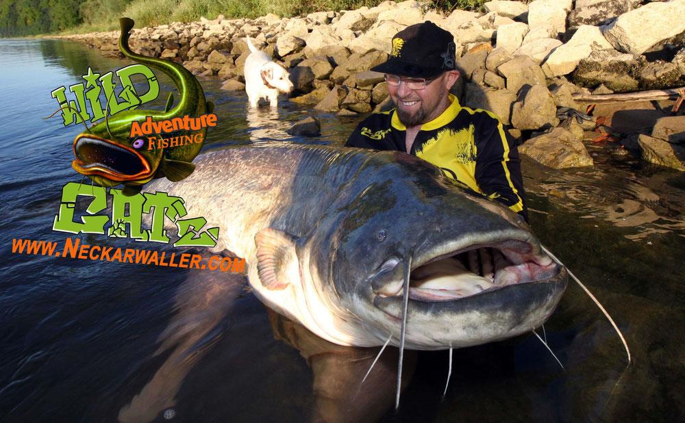 Fast jeder Angler träumt davon einmal einen Riesenwaller zu drillen und diesen Erfolgreich mit dem Wallergriff zu landen