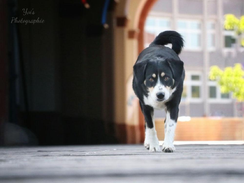 Hundefotowalk