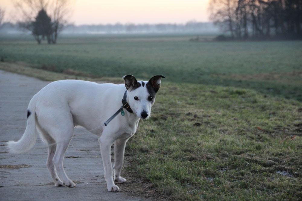 Bild: Joey im Wendland; Smeura Rumänien, Tierhilfe Hoffnung, Tierheim Bielefeld