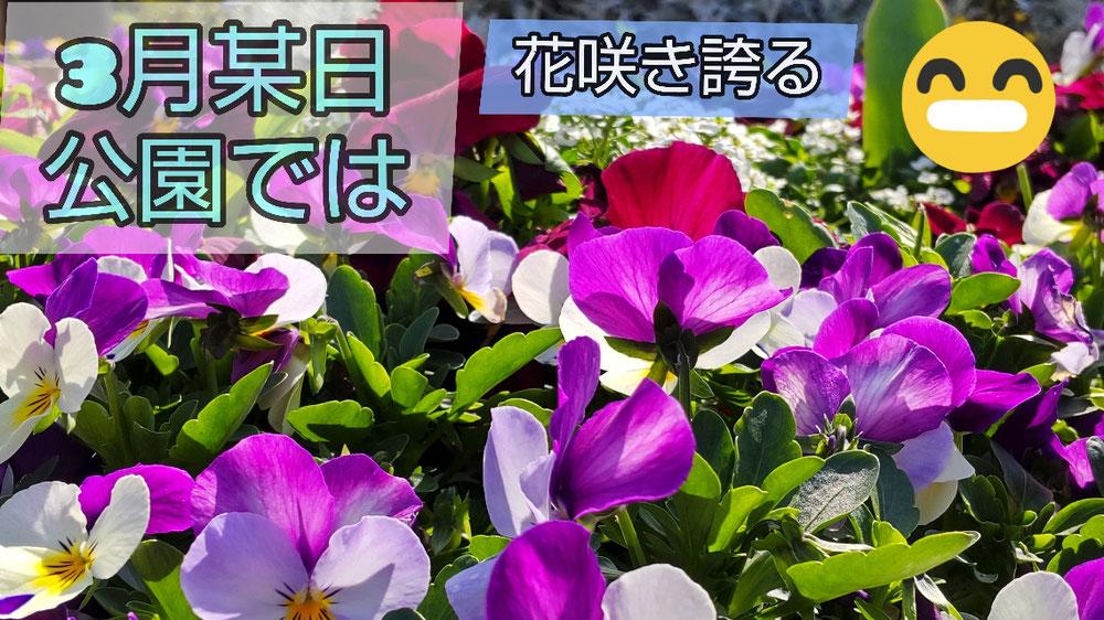 2021年3月某日 公園では花咲き誇る