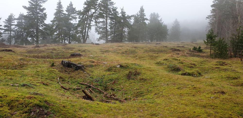Begraste Geschütz-Kraterlandschaft
