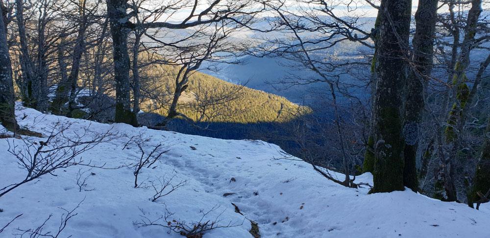 Winterwald Vogesen