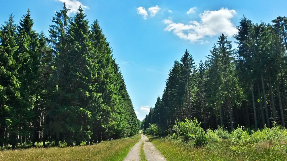 Waldeinsamkeit auf dem Eifelsteig, Etappe 2 nähe Reinartshof