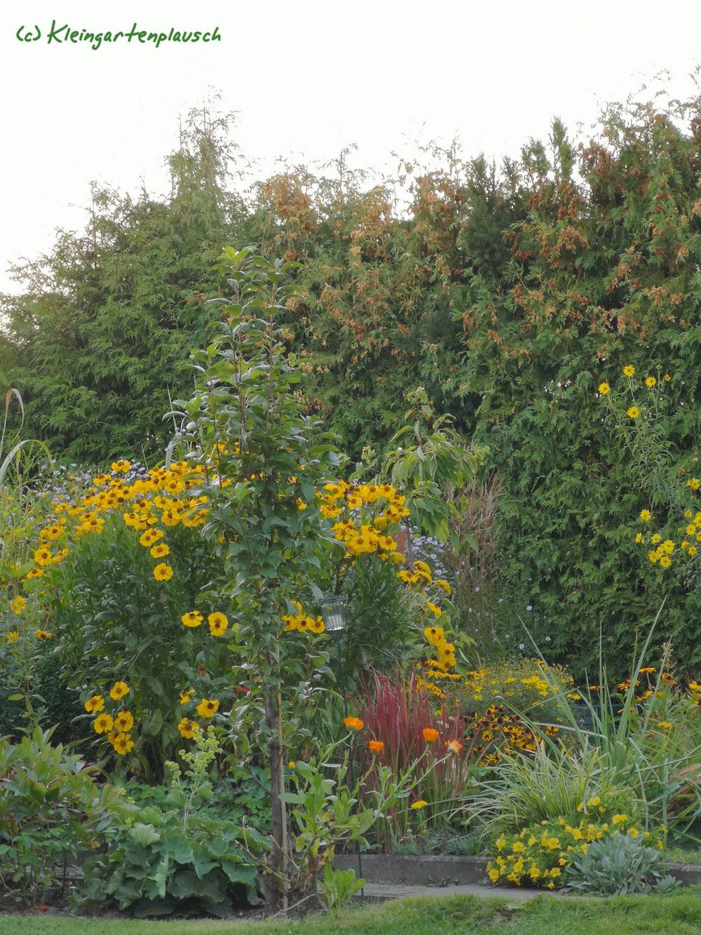 Mal ein Gesamt-Blick aufs gelbe Pflanzenzimmer...