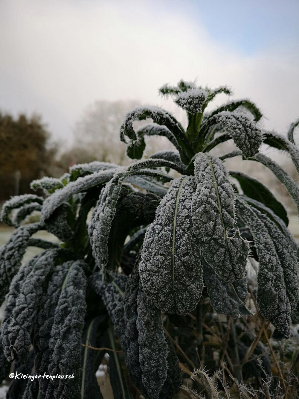 Und der echte Palmkohl macht auch zu dieser Jahreszeit Freude...